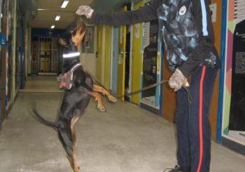 Médiation animale à la maison d'arrêt de Grasse